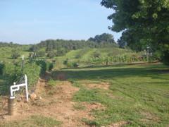 Dalton field