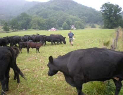 Neal Morgan of Shady Place Farms